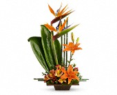 Teleflora's Exotic Grace in Bradenton FL, Tropical Interiors Florist