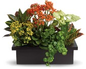 Stylish Plant Assortment in Canton NY, White's Flowers
