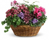 Simply Chic Mixed Plant Basket in Agawam MA, Agawam Flower Shop