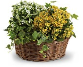 Basket of Joy in Huntington NY, Queen Anne Flowers, Inc