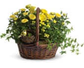 Yellow Trio Basket in Ontario CA, Rogers Flower Shop