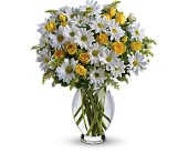 Teleflora's Amazing Daisy in Flower Delivery Express MI, Flower Delivery Express