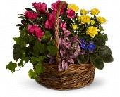 Blooming Garden Basket in Lewiston, Maine, Val's Flower Boutique, Inc.