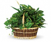 Large Basket Garden in Winnipeg MB, Hi-Way Florists, Ltd