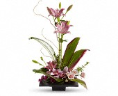 Imagination Blooms with Cymbidium Orchids in Holladay UT, Brown Floral