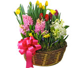 Spectacular Spring Bulb Gardens - Starting At in Cleves OH, Nature Nook Florist & Wine Shop