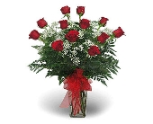 DOZEN ROSES ARRANGED in Gainesville FL, Floral Expressions Florist