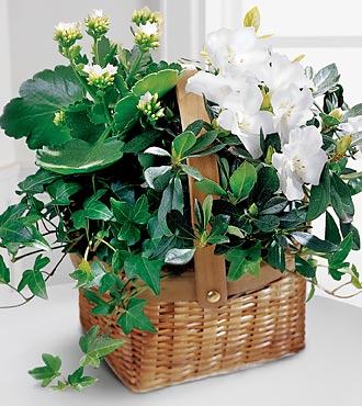 The FTD� White Assortment Basket in Highlands Ranch CO, TD Florist Designs