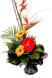 TROPICAL HANDTIED in Calgary AB, The Tree House Flower, Plant & Gift Shop