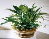 Green Foliage Basket in Mobile, Alabama, Zimlich Brothers Florist & Greenhouse
