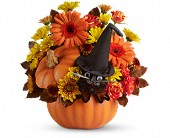 Teleflora's Bewitched Cat Bouquet in Christiansburg VA, Gates Flowers & Gifts