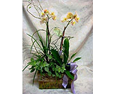 Orchid Series 117 in Lake Forest, California, Cheers Floral Creations