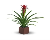Bromeliad Beauty in Smyrna GA, Floral Creations Florist