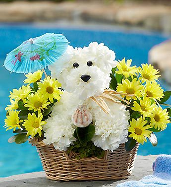 Doggie Paddle in Woodbridge VA, Lake Ridge Florist