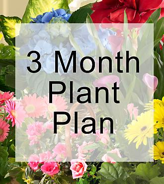 Monthly Plant Gift Plan, picture