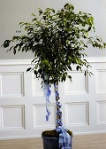 Ficus Tree with Braided Ribbion in Roselle IL, Roselle Flowers