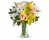 Teleflora's Daisies and Sunbeams in Charlotte NC, Starclaire House Of Flowers Florist