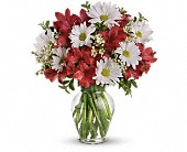Dancing in Daisies in Watertown NY, Sherwood Florist