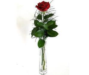 Single Red Rose Bud Vase in Perrysburg & Toledo OH - Ann Arbor MI OH, Ken's Flower Shops