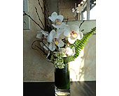 Cymbidium orchids in Thornhill ON, Wisteria Floral Design