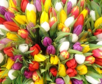 30 Gorgeous Tulips Bouquet (Special Offer), picture