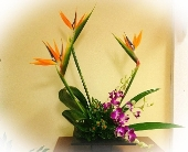 Tropical Blooms in Palm Beach Gardens FL, Floral Gardens & Gifts