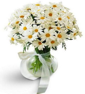 Daisy Vase in Flower Delivery Express MI, Flower Delivery Express