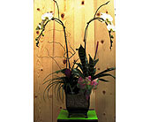Large Double Orchid with Tropical Plants in San Diego CA, The Floral Gallery