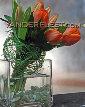 Orange Tulips Modern Floral Design in Etobicoke ON, VANDERFLEET Flowers