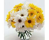 Flowers Depot Yellow-and-White-Daisies in San Clemente CA, Beach City Florist
