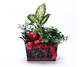 Garden-Plants-with-Blooms in San Clemente CA, Beach City Florist
