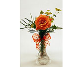 Single-Stem-Orange-Rose in San Clemente CA, Beach City Florist