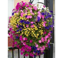 Hanging Baskets in Perrysburg OH, Ken's Flower Shops