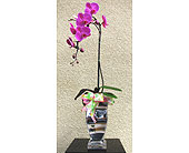 Phalaenopsis-orchid-in-a-silver-vase in San Diego CA, The Floral Gallery