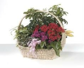 European Basket - Large in Nashville TN, Emma's Flowers & Gifts, Inc.