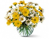 Dashing Daisies in London ON, Lovebird Flowers Inc