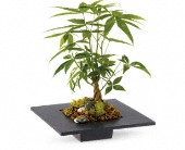 Money Tree in Traverse City MI, Cherryland Floral & Gifts, Inc.