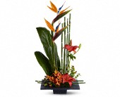 Nicoma Park Flowers - Paradise Found - Del City Village Florist