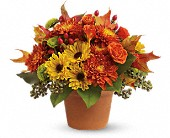 Iron Mountain Flowers - Sugar Maples - Miller Floral