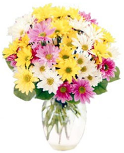 Assorted Daisy Vase in Nationwide MI, Wesley Berry Florist, Inc.