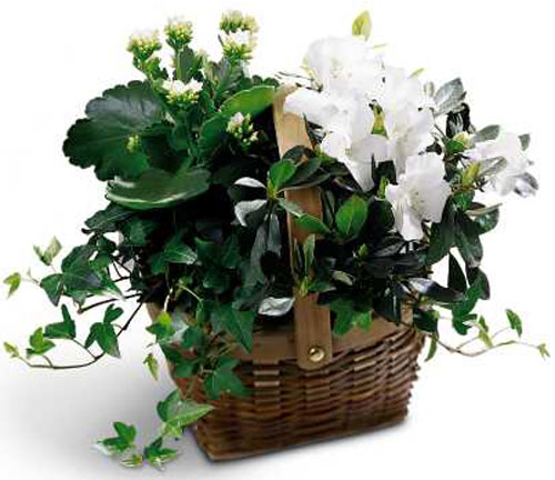 White Assortment Basket in Nationwide MI, Wesley Berry Florist, Inc.