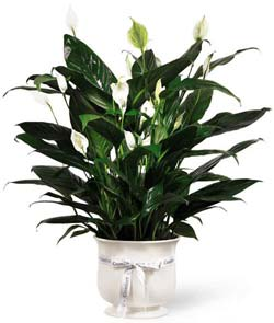 FTD� Comfort Planter in Nationwide MI, Wesley Berry Florist, Inc.