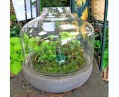 Terrarium Garden in Wichita KS, Tillie's Flower Shop