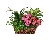 Azalea Basket in Dallas TX, In Bloom Flowers, Gifts and More