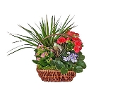Merry Medley Garden Basket in Dallas TX, In Bloom Flowers, Gifts and More
