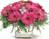 Gerbera Glory in Nationwide MI, Wesley Berry Florist, Inc.