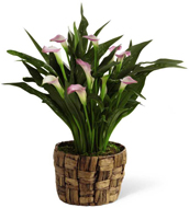 FTD� Calla Lily Planter in Nationwide MI, Wesley Berry Florist, Inc.