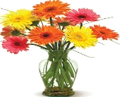 Happy Gerberas in Nationwide MI, Wesley Berry Florist, Inc.