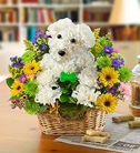1 800 Flowers-Man's Best Friend in Woodbridge VA, Lake Ridge Florist