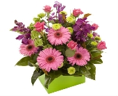 Box of Fun in florist flowers Australia, Teleflora